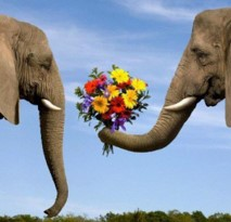 Elephants & flowers
