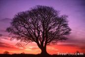 Tree w-colors